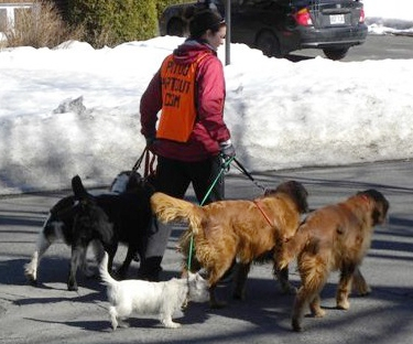 service de promenade de chiens promeneur promeneuse canin pitou partout. Black Bedroom Furniture Sets. Home Design Ideas
